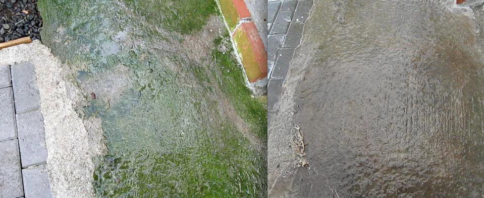 ¡No sufras más con las aceras verdes en temporada de lluvia!